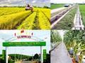 Xây dựng nông thôn mới thực chất - vững bền