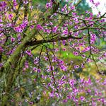 """""""Mùa hoa núi"""": Thấm đẫm văn hóa vùng cao"""