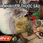 Trà ướp hương nhài hảo hạng hay ướp thuốc trừ sâu- - TPSHB - ANTV