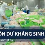 Kinh hoàng tồn dư kháng sinh trong thịt cá