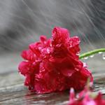 Dự báo thời tiết ngày 8/9: Ba miền đều có mưa rào và rải rác có dông