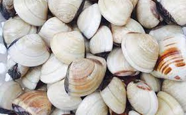 6 lưu ý vàng khi ăn ngao, trai, sò, ốc, hến để không bị ngộ độc